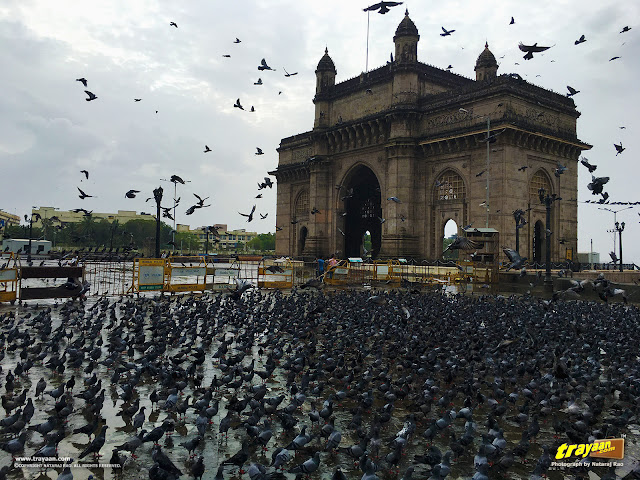 Pigeons at the Gateway of India