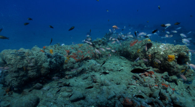 16th century Genoese wrecks discovered off north coast of Corsica