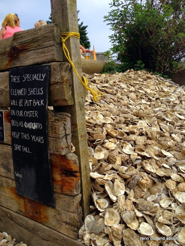 {ErinOutandAbout} Whitstable Oyster Festival