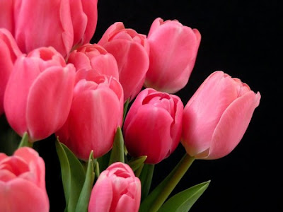 Szimbólumok/Növényszimbolika: A virágok szimbolikájának útmutatója