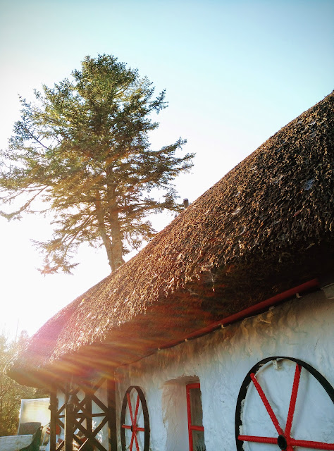 thatched house, sunlight, tree