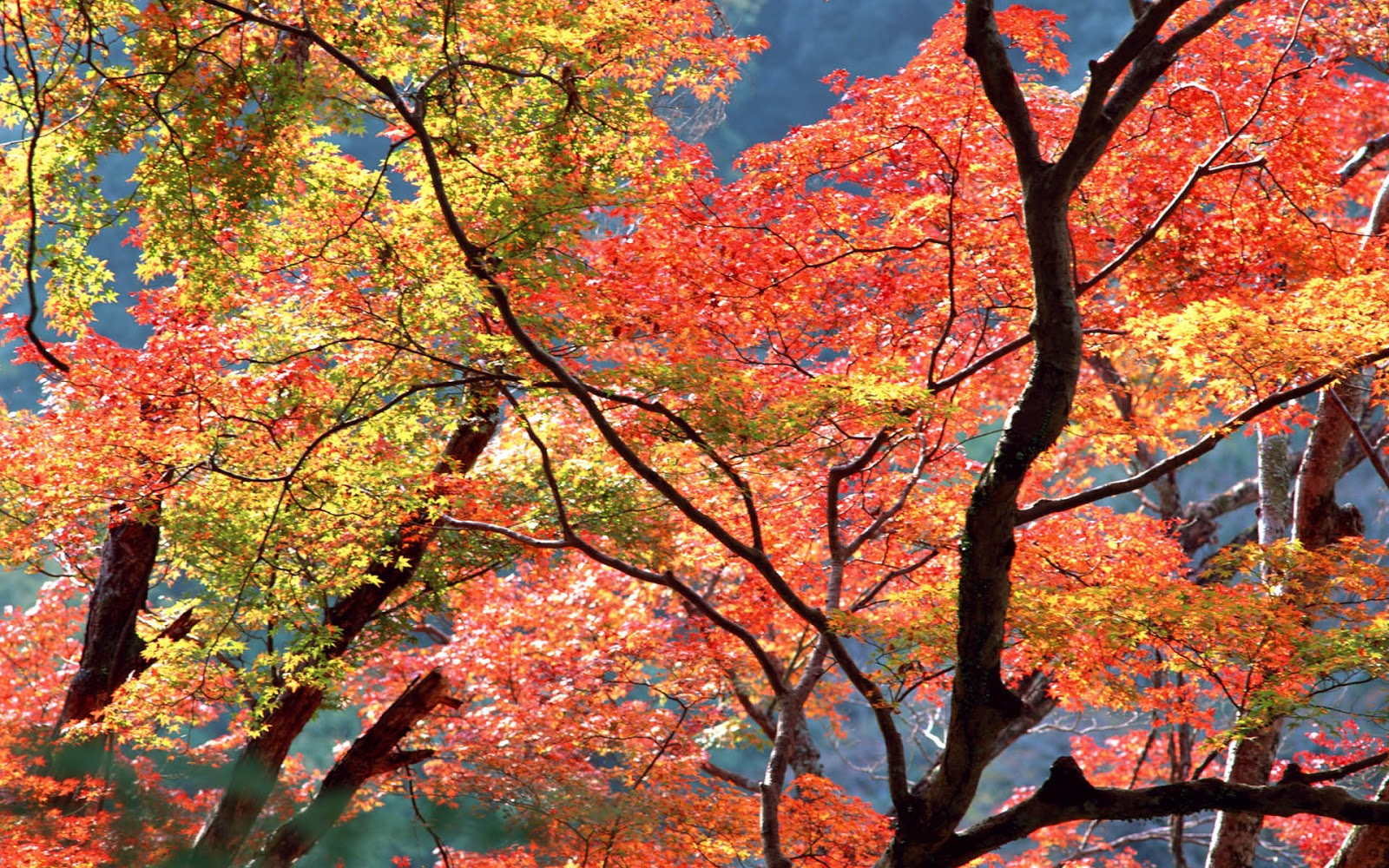 Free Fall Harvest Wallpaper 40 Autumn Trees Wallpapers Most Beautiful Places In The
