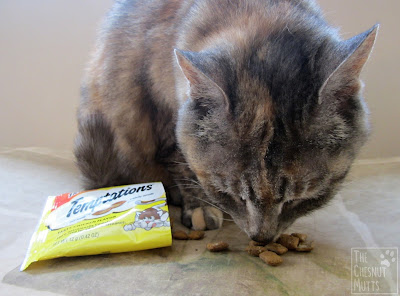 Smooshie eating Temptations Cat Treats