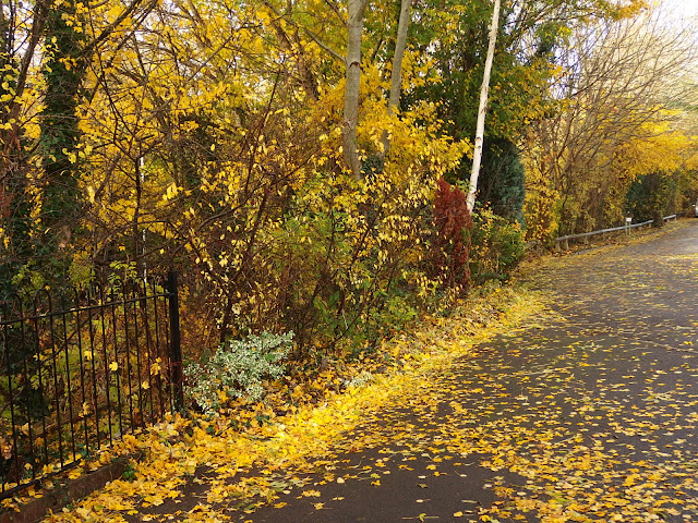 Our front drive and side garden paved with golden leaves