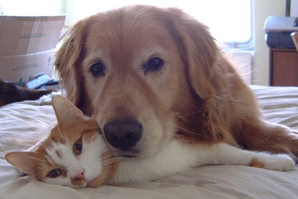 kollima.gr - 40 φωτογραφίες που αποδεικνύουν ότι γάτες και σκύλοι μπορούν να γίνουν οι καλύτεροι φίλοι!