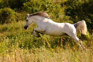 White horse jumping through bushs in a field