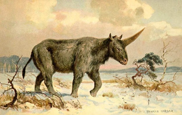 New Fossil Discovery Suggests Unicorns Might Have Been