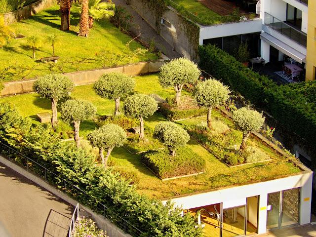 árvores no telhado