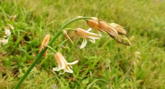 Travel, Kaas Plateau, Valley of Flowers Maharashtra, Flowers of the World, Wild Flowers, Beautiful Kaas
