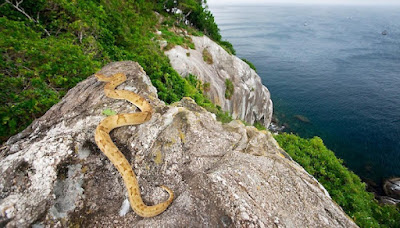 pulau misterius paling berbahaya