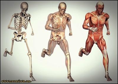 Sistem Gerak Mansuia, Sistem Gerak Manusia Otot, Sistem Gerak Manusia Tulang. Macam-macam Sistem Gerak Manusia, Jenis-jenis Sistem Gerak Manusia, Penjelasan tentang Sistem Gerak Manusia, Apa itu SIstem Gerak Manusia.