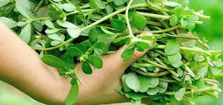Beldroegas são ricas em cálcio e ferro, esta planta também ajuda a saúde dos ossos. Como outras plantas, as folhas são ricas em vitamina A, e ajudam a prevenir o cancro. Também é rica Omega 3, que protege contra problemas cardíacos.