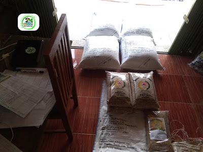 Benih Padi Pesanan    BENNY SYAFRUDDIN Palembang, Sumsel.    Benih Sebelum di Packing.