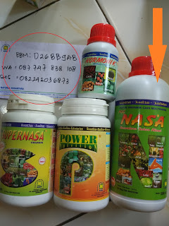 distributor pupuk sawit nasa