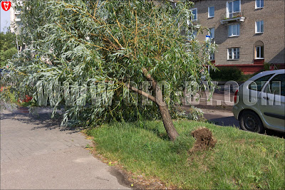 Минск. Дерево поваленное ураганом 13 июля