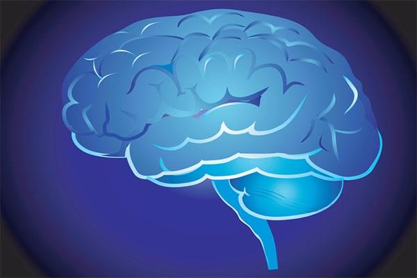 Интересные факты о головном мозге человека