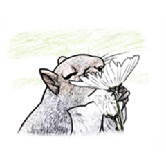 Kiss flowers squirrel
