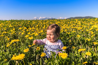 Image: Baby in the Flowers, by Dusan Tesanovic on Pixabay