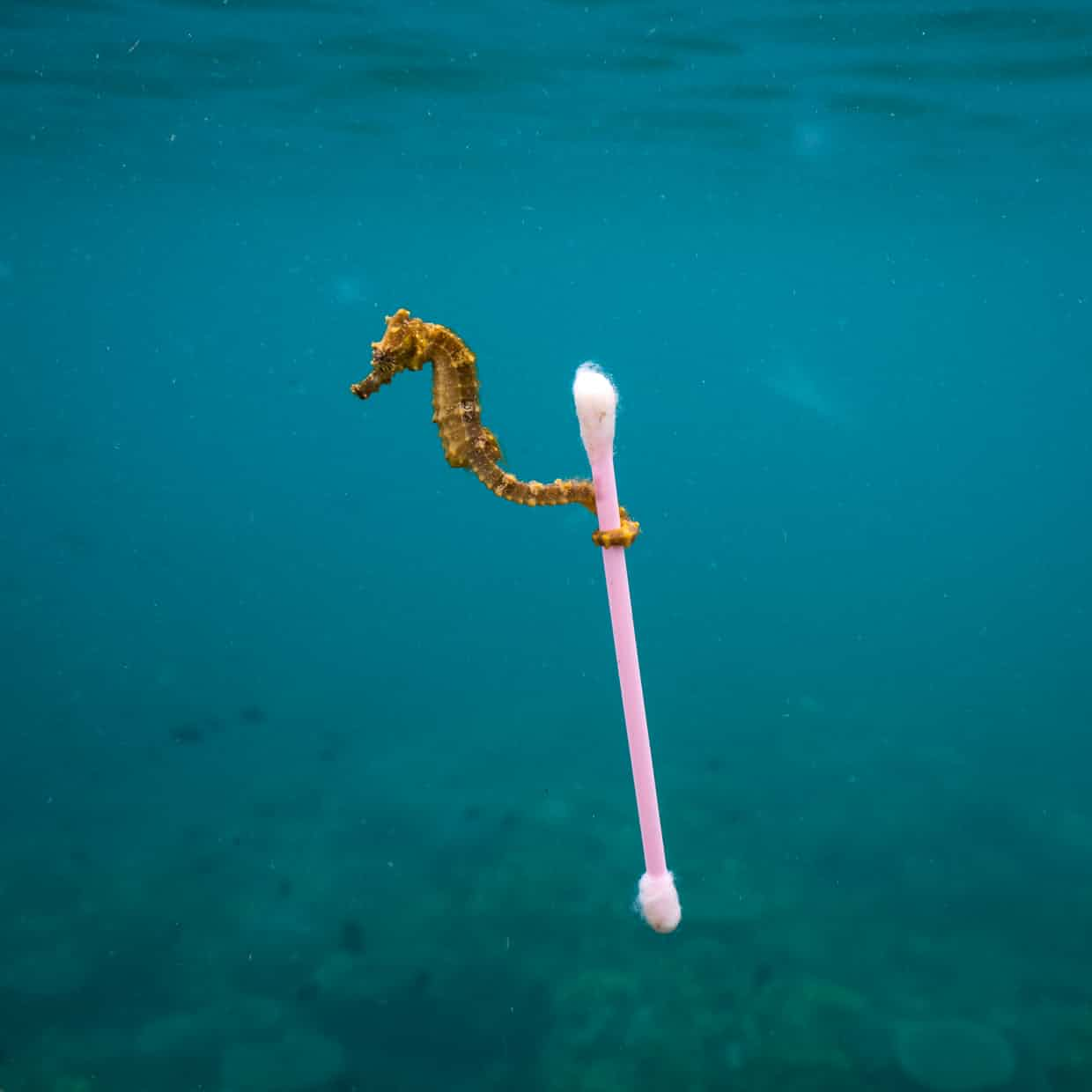 25 Of The Most Intriguing Pictures Of 2017 - A seahorse grabs on to rubbish in Indonesia
