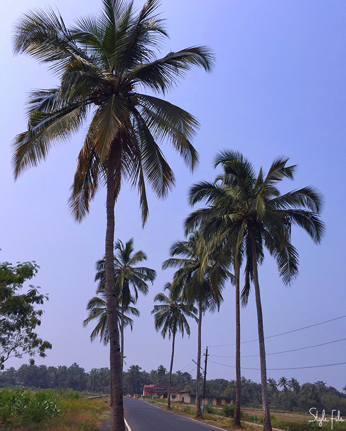 Image of a quiet road surrounded by tall coconut palm trees, fields and blue sky in a small town