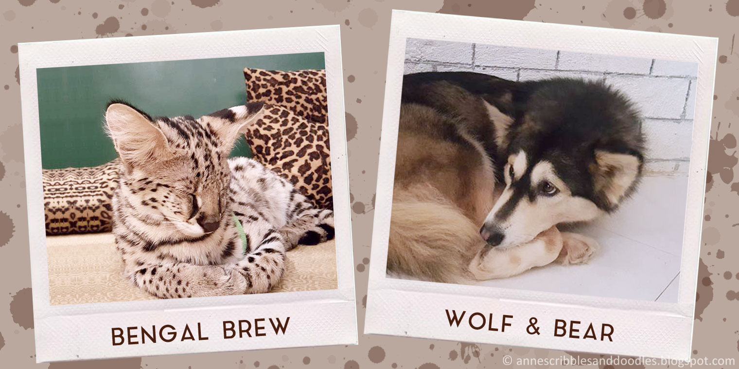 Bengal Brew + Wolf and Bear Cafe | Anne's Scribbles and Doodles