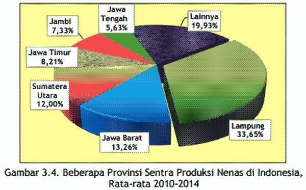 Provinsi Sentra Produksi Nanas Indonesia Fakta Nanas nandur93