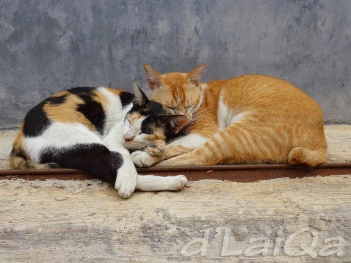 kucing (3)