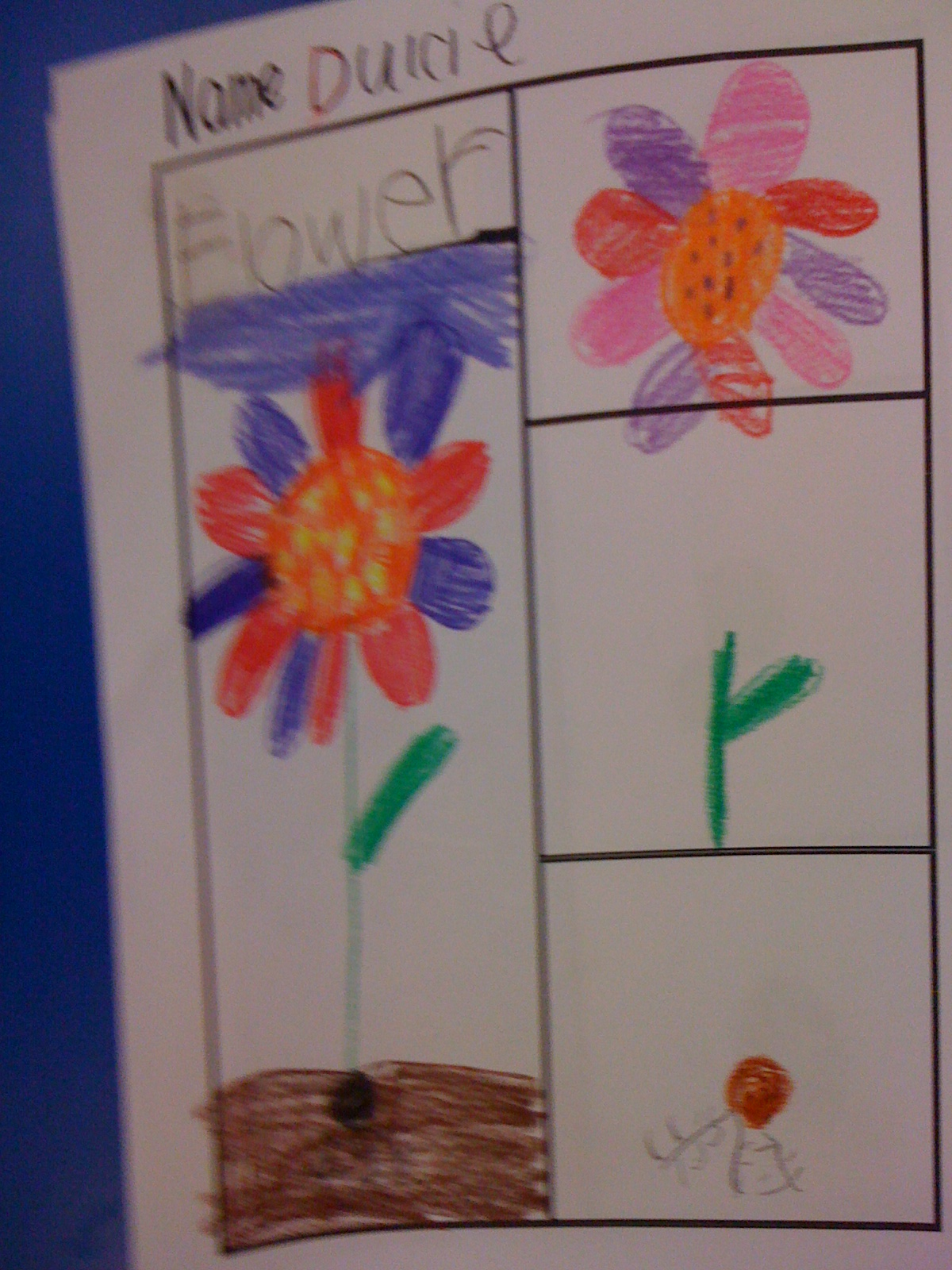 Thinking Maps In Kindergarten