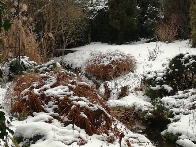 kolory zimowego ogrodu