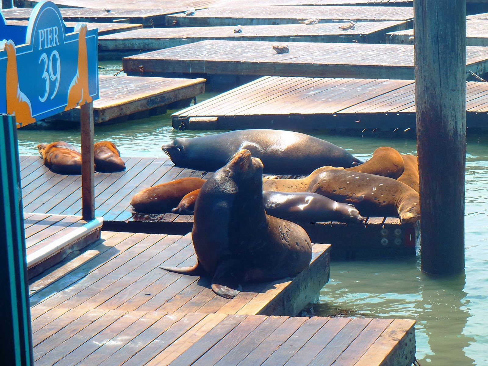 Visiting the Sea Lions of San Francisco's Pier 39