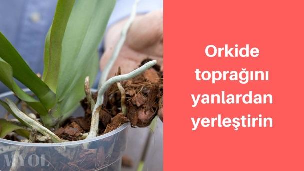 Orkide toprağının yerleştirilmesi