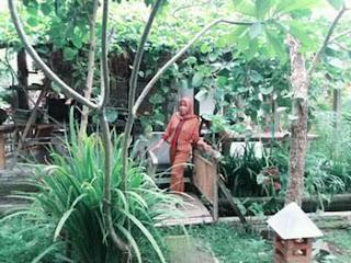 Lies di taman rumah Desa Kemiren