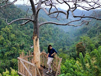 Watu Tekek Kulonprogo, Keindahan Alam Tersembunyi di Jogja