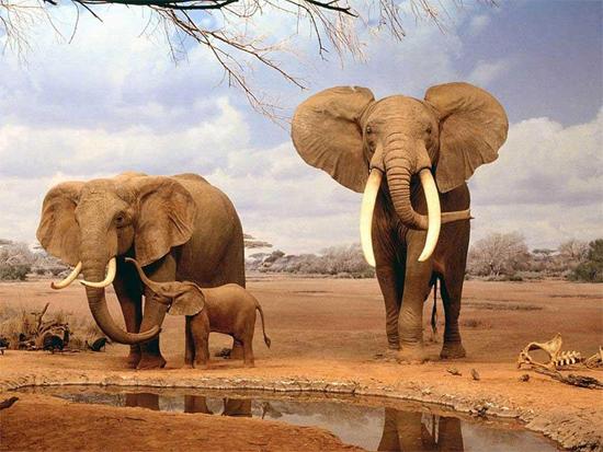 elefantes - dia da terra - divulgação