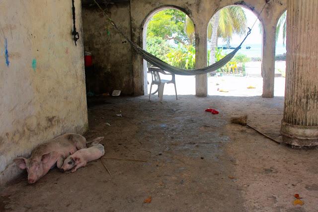 Porcos e indigentes habitam a mansão abandonada de Pablo Escobar no Caribe Colombiano.