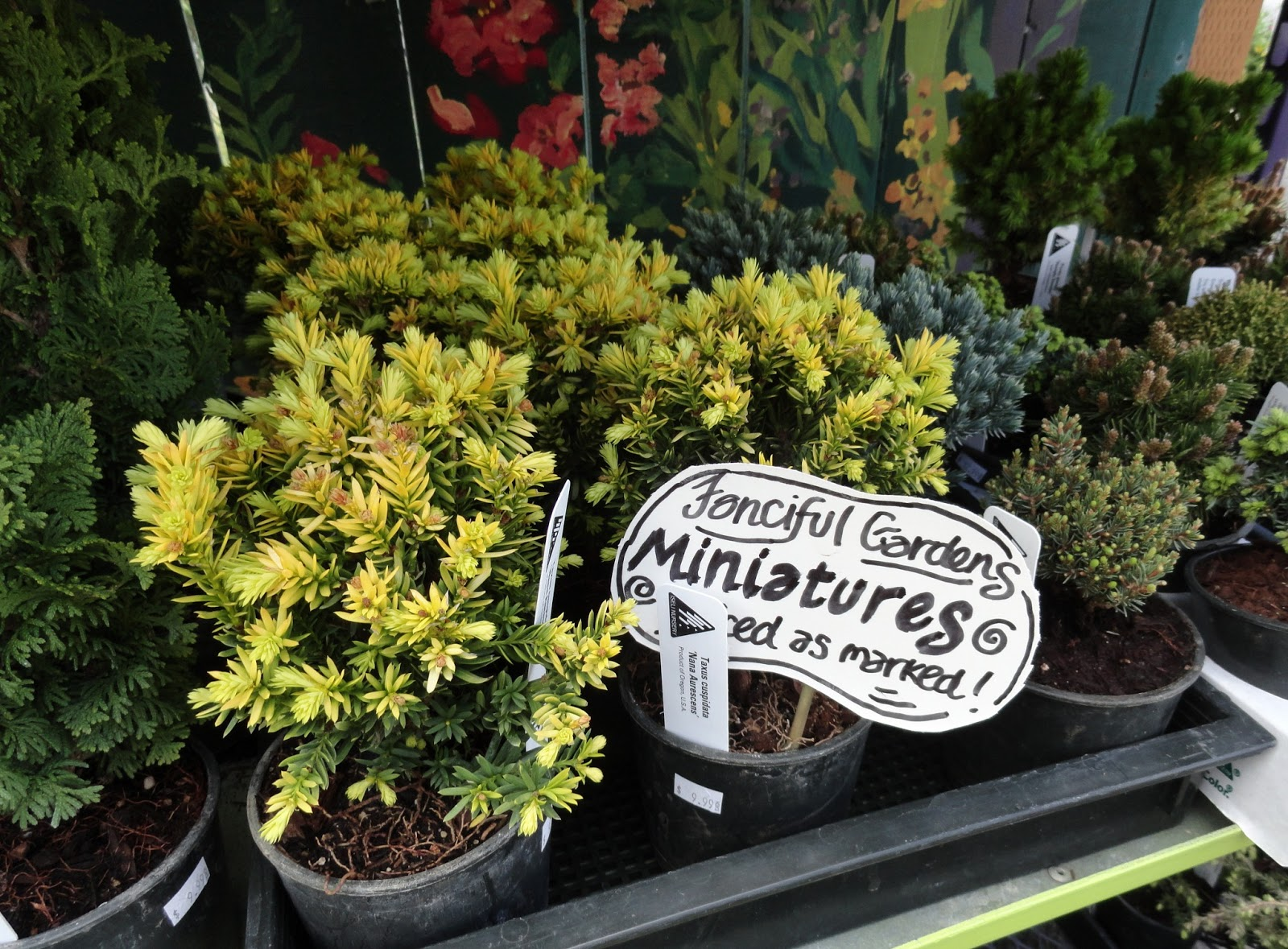 Blessed With So Many Fantastic Nurseries The Fact That It S Survived And Hopefully Prospered They Ve Been In Business Since At Least 2010 Spokane