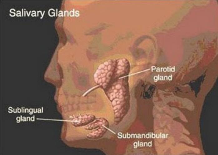 Mumps Disease Transmission
