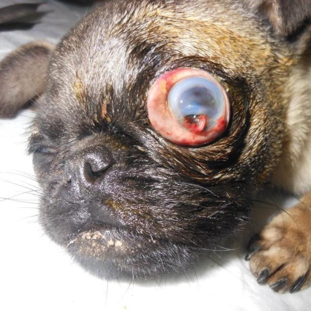 Removing Cat Eye Surgery