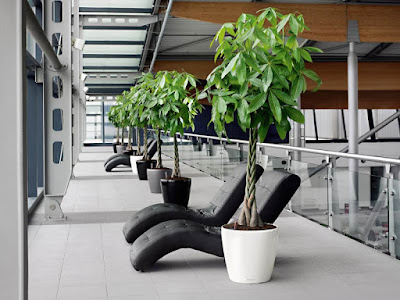 Tukang taman surabaya tanaman Hias Untuk Ruangan Tertutup