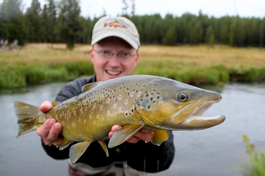 Large brown trout caught while fly fishing the Gibbon River in Yellowstone National Park
