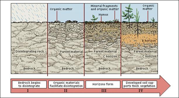5 Fase Perkembangan Horison Tanah