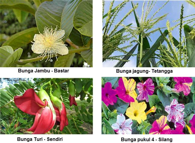 78+ Gambar Bunga Jagung Dan Bagian Bagiannya Paling Baru