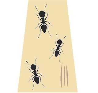 白蟻螞蟻進駐