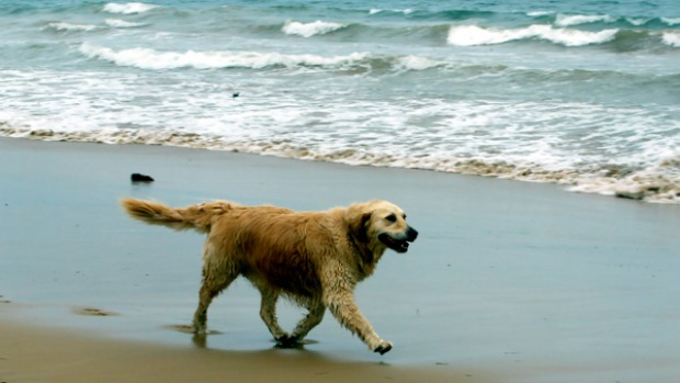 Culburra-Beach-Dog-Friendly