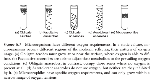 Physiology Of Growth On Microorganisms