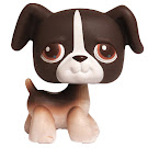 Littlest Pet Shop Singles Boxer (#287) Pet