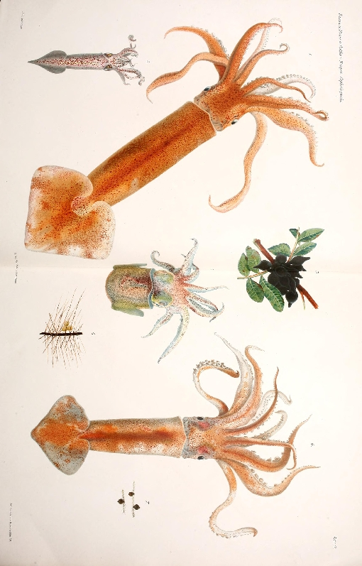 marine species book illustratio