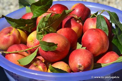 португальские фрукты