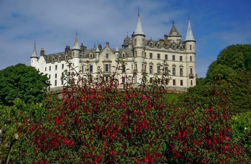 castillo escocés y fucsias rojas