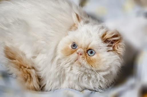 Karmy dla starszych kotów